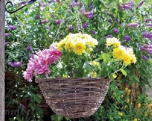 LOG CABINS xx - Hanging baskets and planters