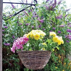 SUMMERHOUSES xx - Hanging baskets and planters